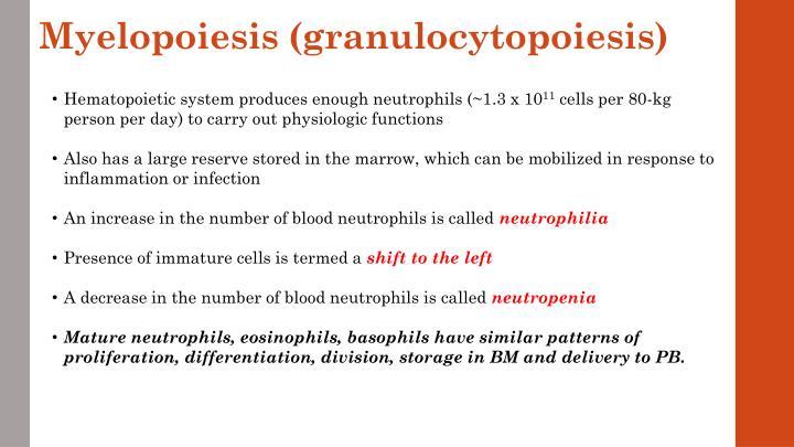 Myelopoiesis (granulocytopoiesis)