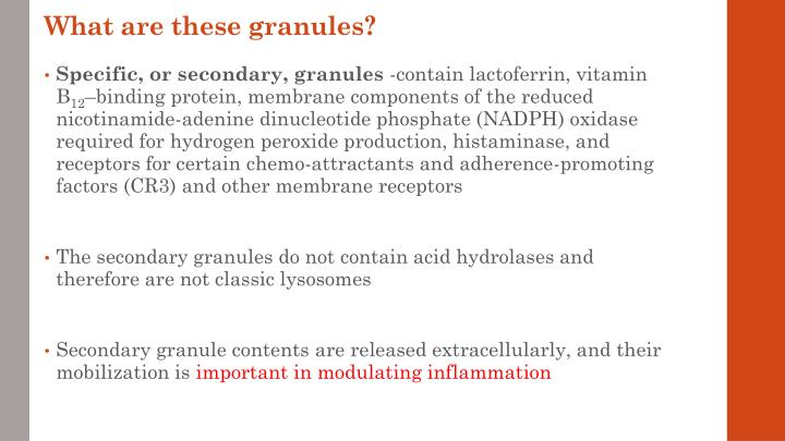 What are these granules?