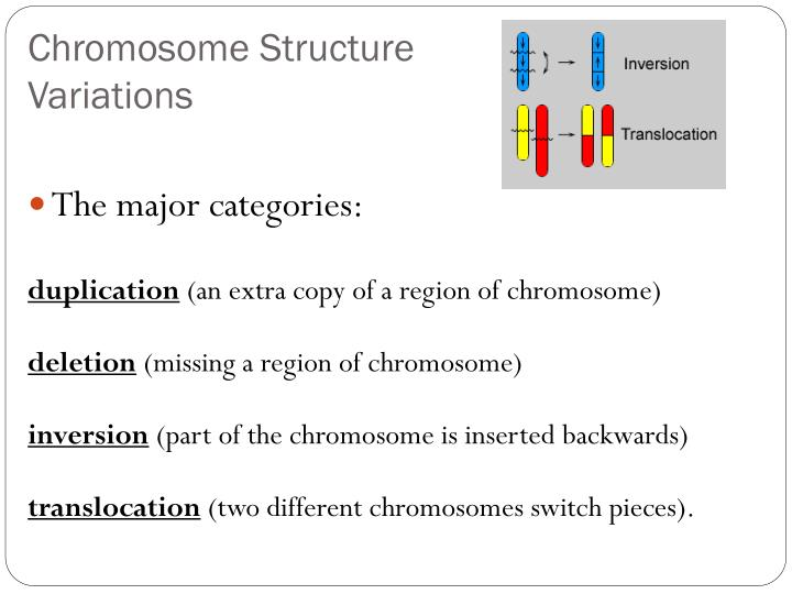 Chromosome Structure Variations