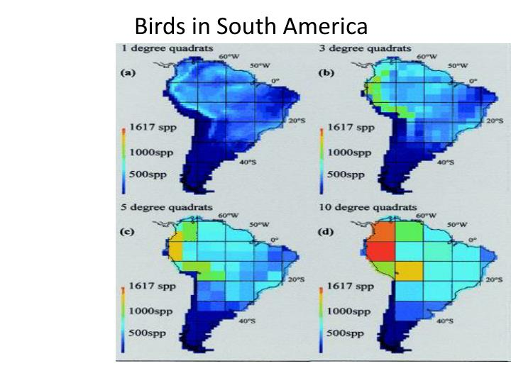Birds in South America