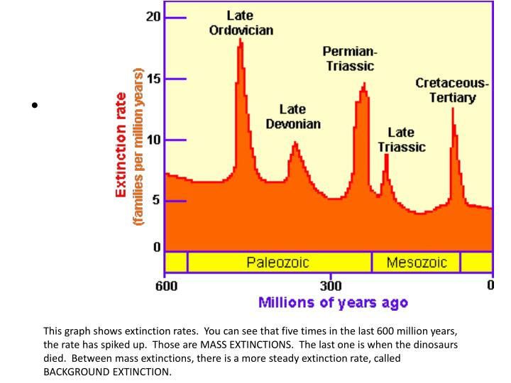 This graph shows extinction rates.  You can see that five times in the last 600 million years, the rate has spiked up.  Those are MASS EXTINCTIONS.  The last one is when the dinosaurs died.  Between mass extinctions, there is a more steady extinction rate, called BACKGROUND EXTINCTION.