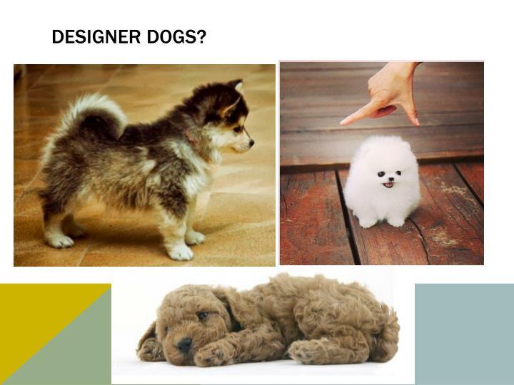 Designer dogs?