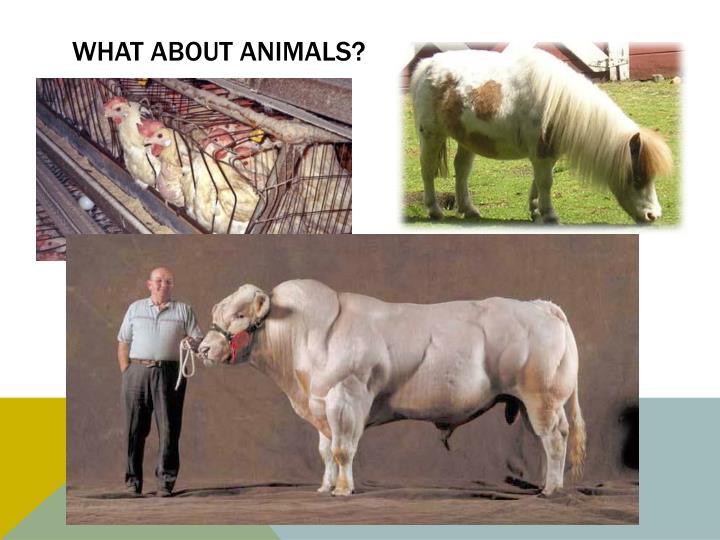 What about animals?