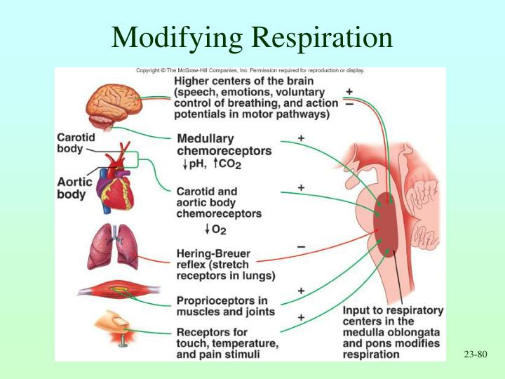 Modifying Respiration