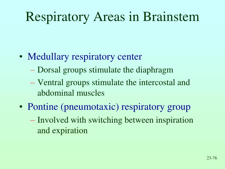 Respiratory Areas in Brainstem