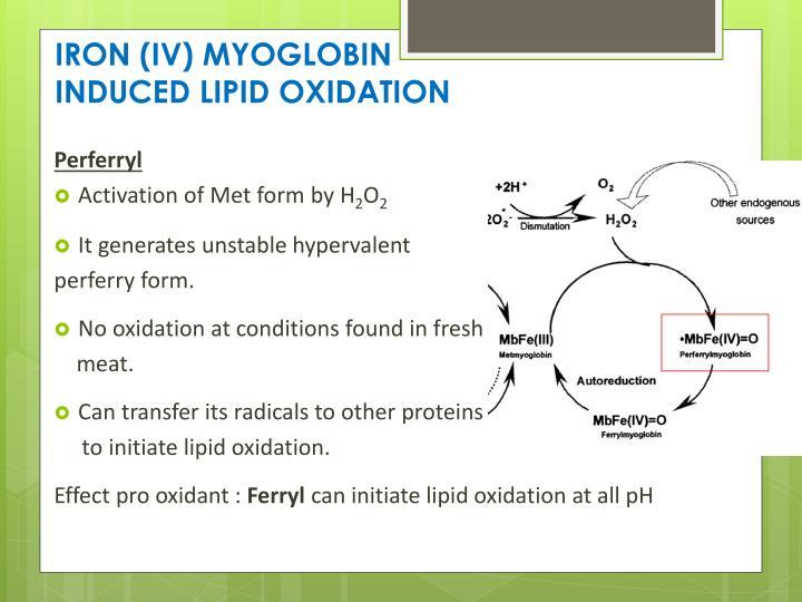 IRON (IV) MYOGLOBIN