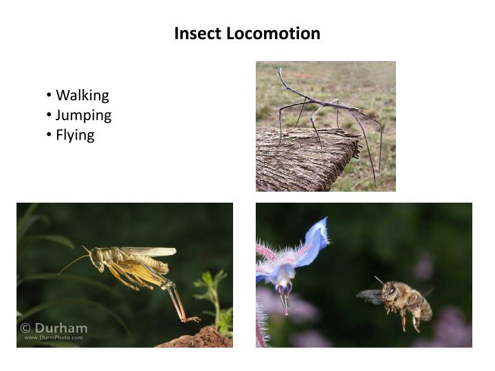 Insect Locomotion