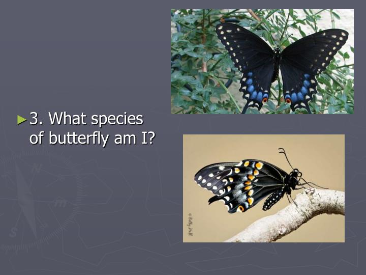 3. What species of butterfly am I?