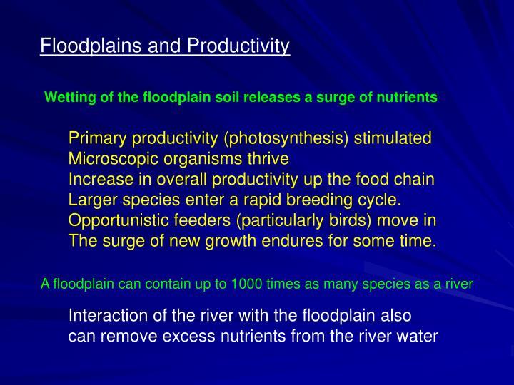 Floodplains and Productivity