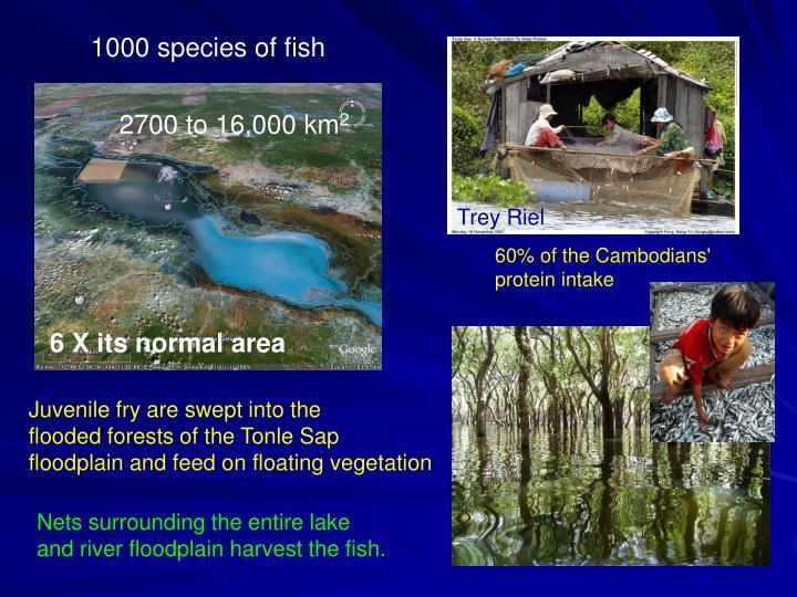 1000 species of fish