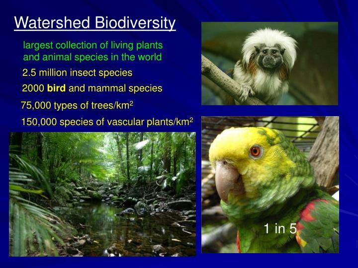 Watershed Biodiversity