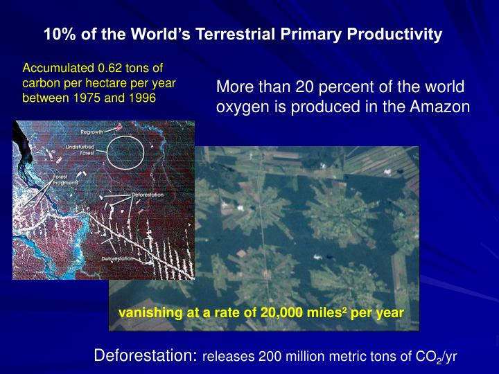 10% of the World's Terrestrial Primary Productivity