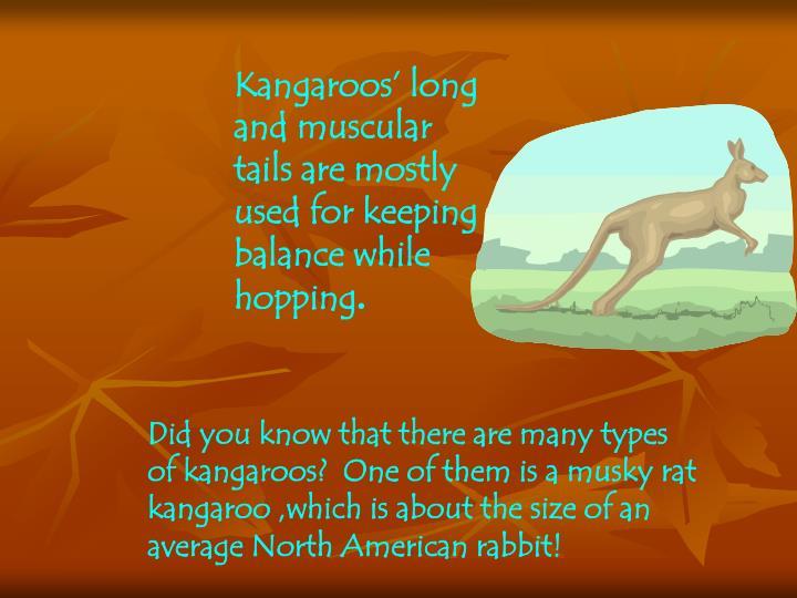 Kangaroos'