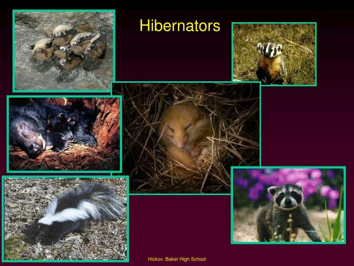 Hibernators