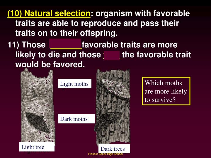 (10) Natural selection