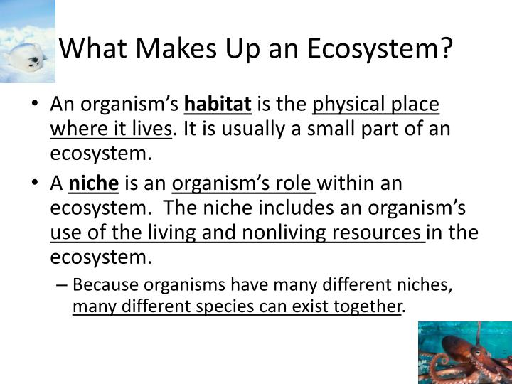 What Makes Up an Ecosystem?