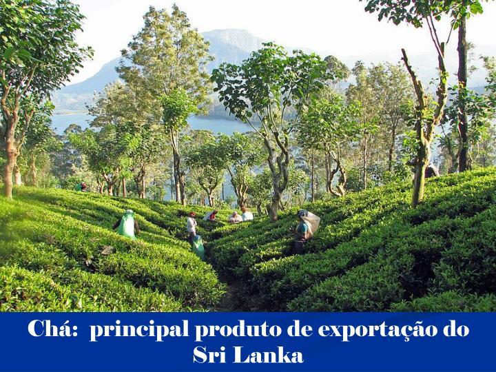 Chá:  principal produto de exportação do