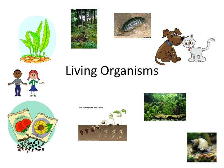living organismns Wetlands classification and types classification of wetlands additional information  as a result, they are a haven for species adapted to living in unaltered.