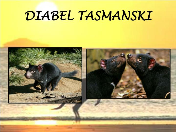DIABEL TASMANSKI