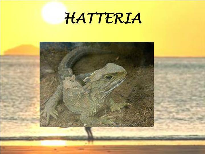HATTERIA