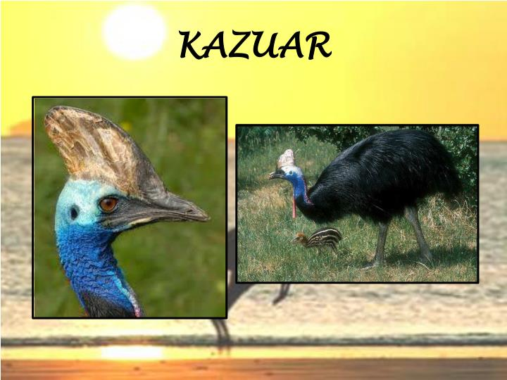 KAZUAR