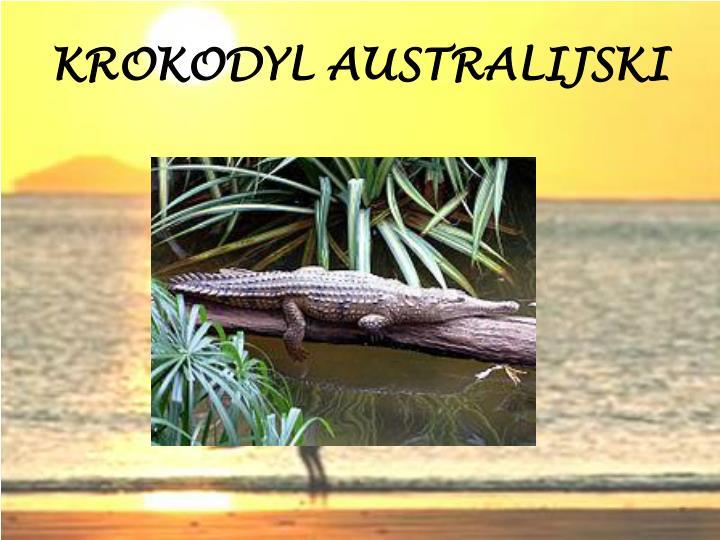 KROKODYL AUSTRALIJSKI