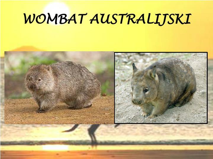 WOMBAT AUSTRALIJSKI