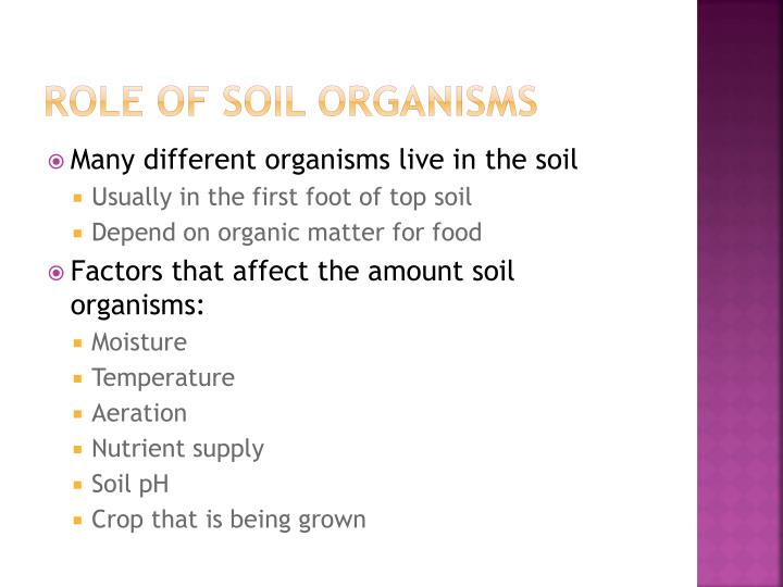 Role of Soil Organisms