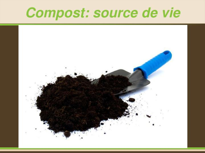 Compost: source de vie
