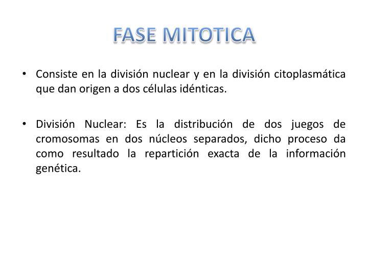 FASE MITOTICA