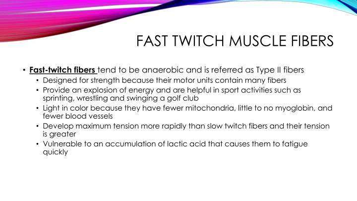 fast twitch muscle fibers
