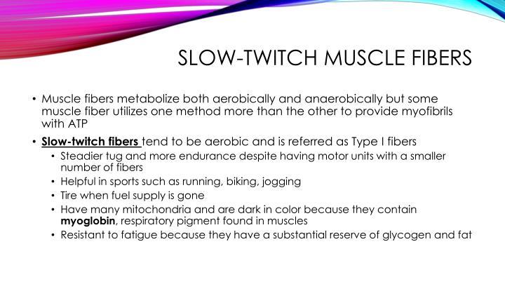 Slow-twitch muscle fibers