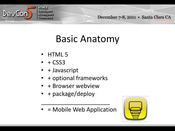 Basic Anatomy