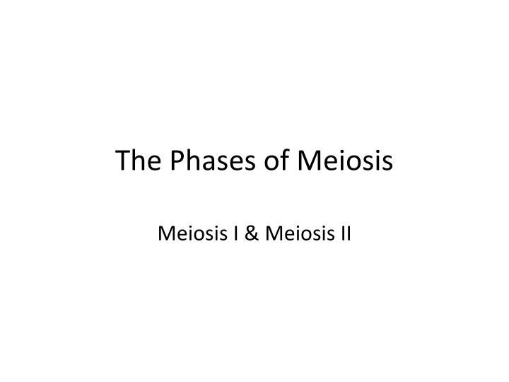 The phases of meiosis