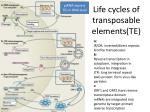 life cycles of transposable elements te