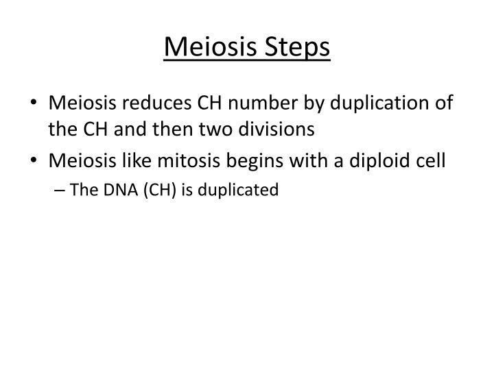 Meiosis Steps