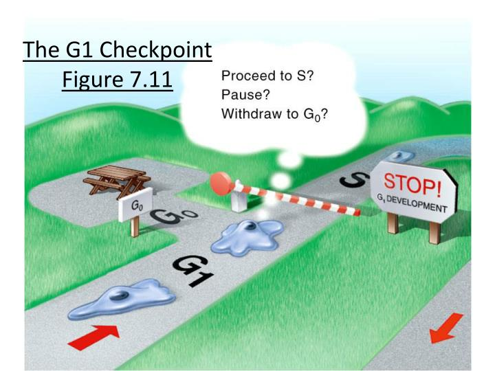 The G1 Checkpoint