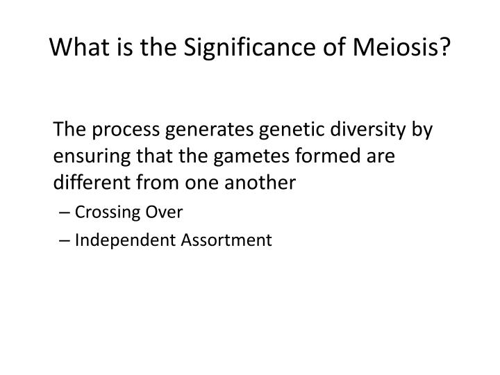 What is the Significance of Meiosis?