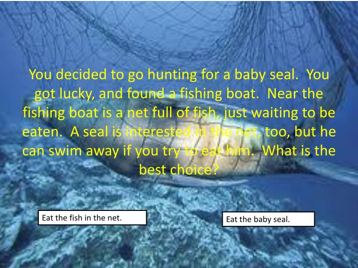 You decided to go hunting for a baby seal.  You got lucky, and found a fishing boat.  Near the fishing boat is a net full of fish, just waiting to be eaten.  A seal is interested in the net, too, but he can swim away if you try to eat him.  What is the best choice?