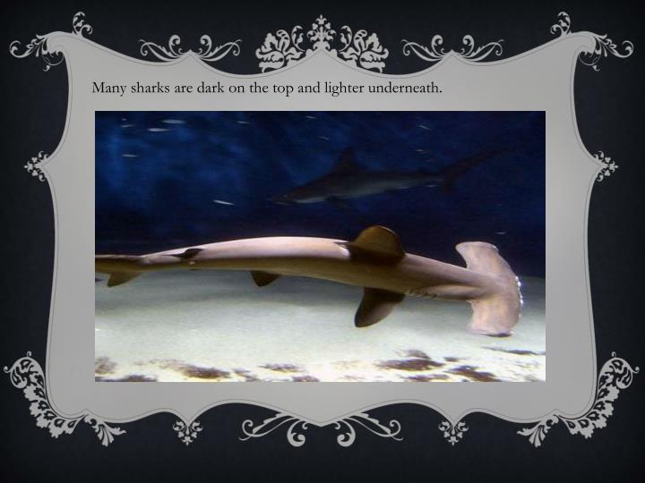 Many sharks are dark on the top and lighter underneath.