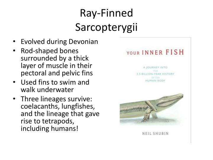 Ray-Finned