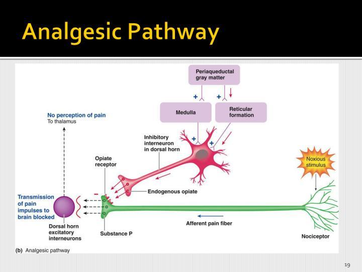 Analgesic Pathway