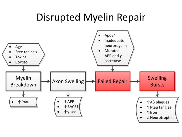 Disrupted Myelin Repair
