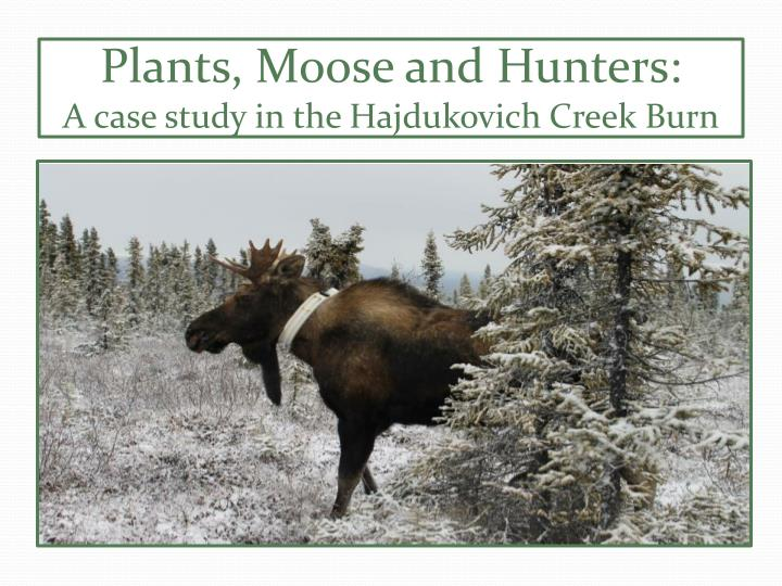 Plants moose and hunters a case study in the hajdukovich creek burn