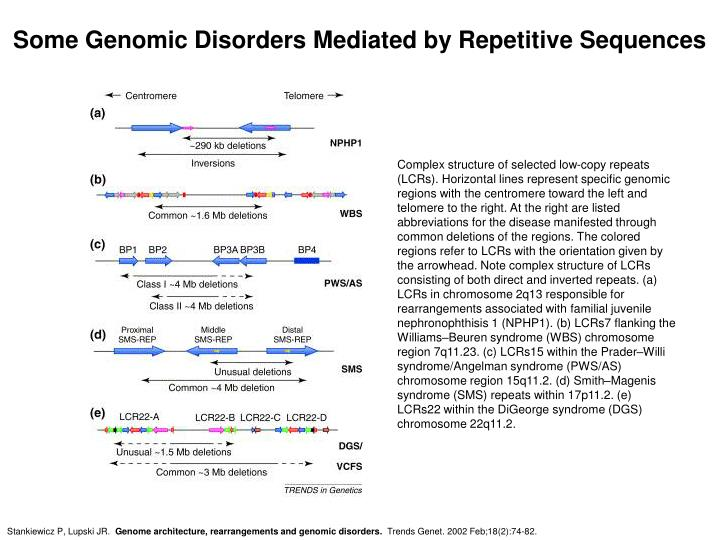 Some Genomic Disorders Mediated by Repetitive Sequences