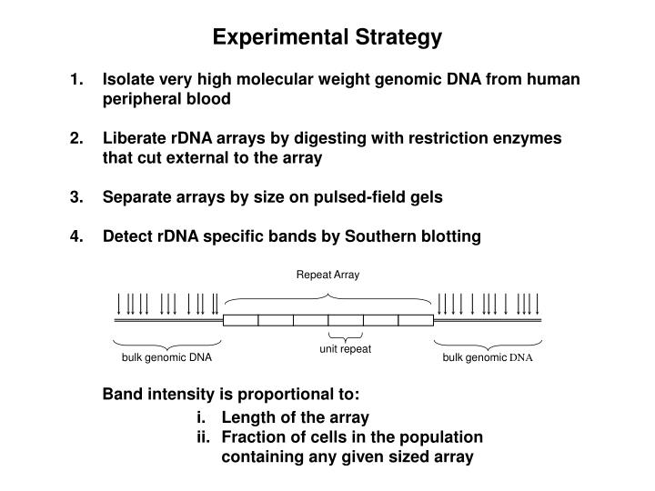 Isolate very high molecular weight genomic DNA from human peripheral blood