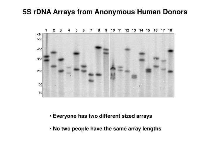 5S rDNA Arrays from Anonymous Human Donors
