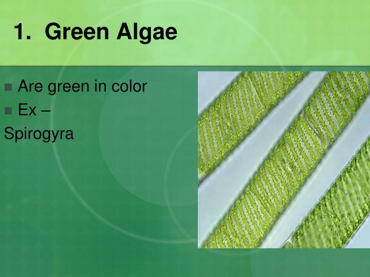1.  Green Algae