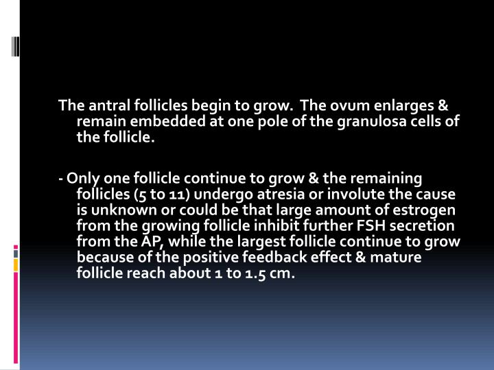 The antral follicles begin to grow.  The ovum enlarges & remain embedded at one pole of the granulosa cells of the follicle.
