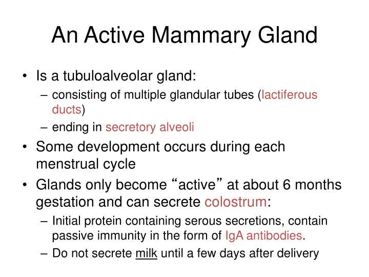An Active Mammary Gland